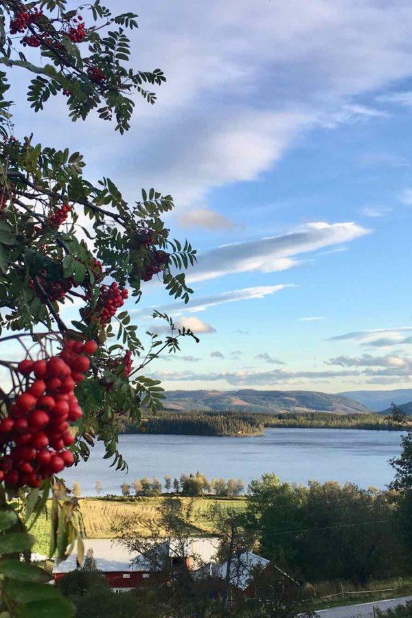 Utsikt fra Ullsaker